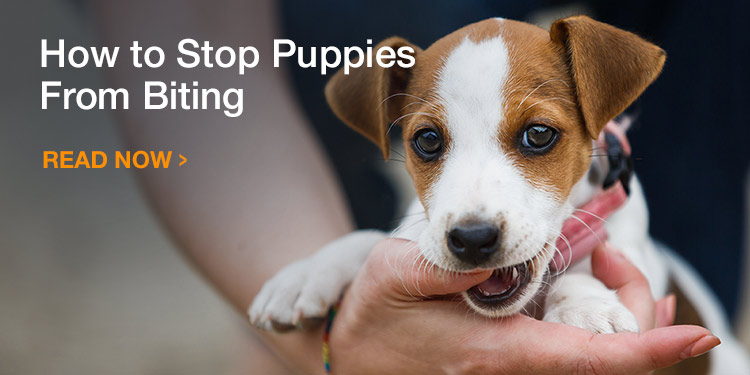 How to Stop Puppies From Biting