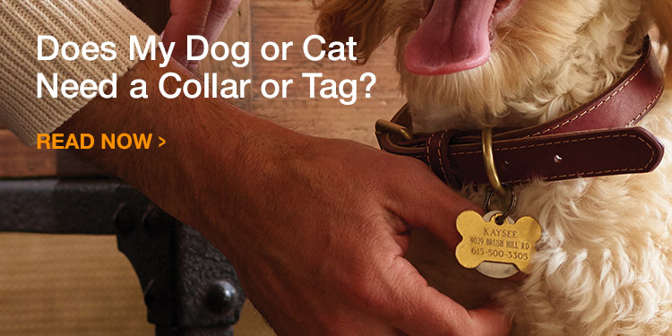 Does My Dog or Cat Need a Collar or Tag?