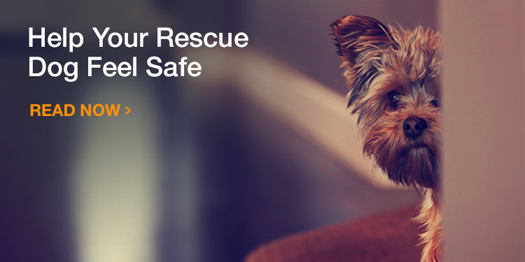 Help Your Rescue Dog Feel Safe