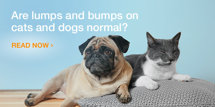Are Lumps and Bumps on Cats and Dogs Normal?