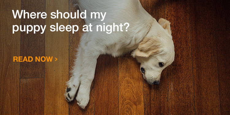 Where should my puppy sleep at night?