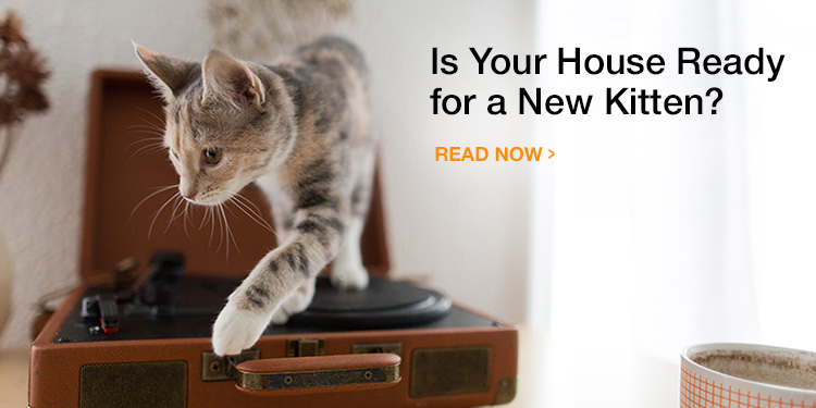 5 Ways to Kitten-Proof Your Home