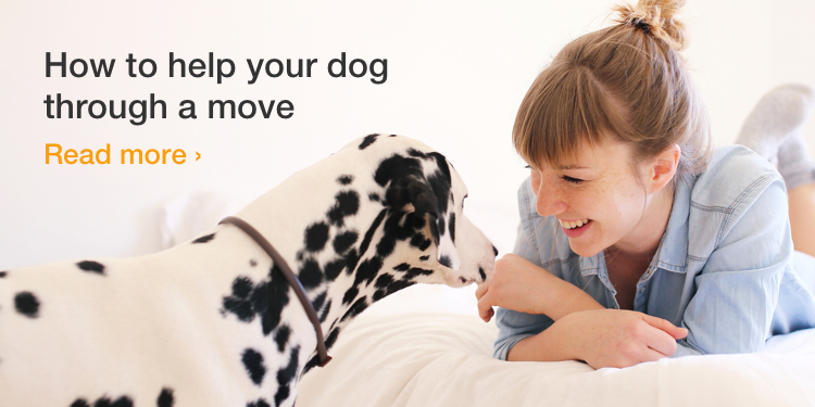How to help your dog through a move