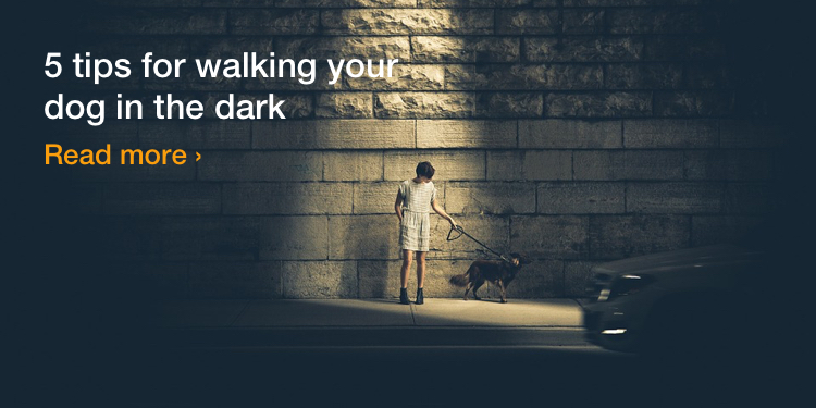 5 tips for walking your dog in the dark