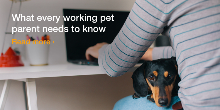 What every working pet parent needs to know