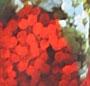 Blossom Montage