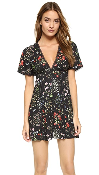 alice + olivia Amara Lace Insert Dress