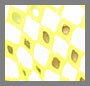 Neon Yellow