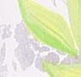 Evergreen Combo