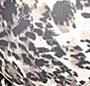 Cheetah Roam Print
