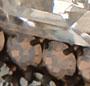 Pyrite/Silver