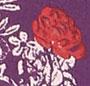 Plumberry Combo