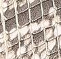 Buttermilk Python