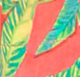 Star Palm