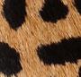 Cheetah Combo