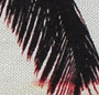 Molokai Palm