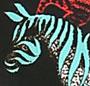 Zebra Kanga
