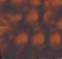 Dark Havana/Brown Gradient