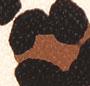 Ocelot (Leopard)