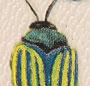 Small Multi Beetle
