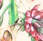 Jasmine/White Floral