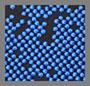 Klein Blue/Black