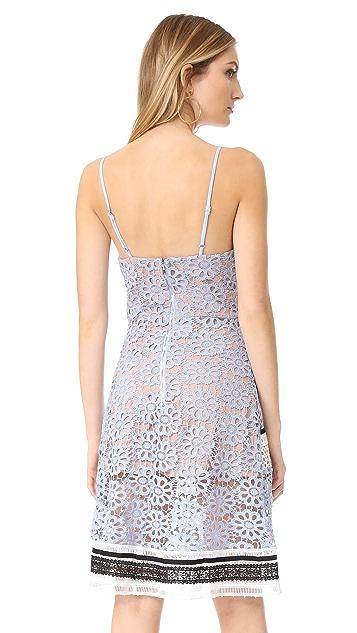 endless rose Contrast Lace Dress