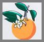 оранжевый цветочный