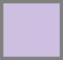 紫罗兰色郁金香