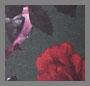 Scarlet Rose Khaki