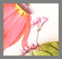 Wallpaper Floral Ivy