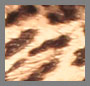 Caramel Leopard