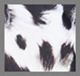 Faded Black Leopard