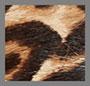 Sand Leopard