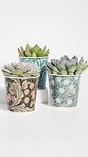 Shopbop @Home V&A Plant Pots