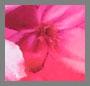 Cartagena Floral