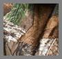 Real Tree Camo