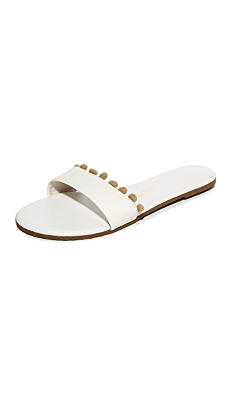 TKEES Alex Pom Slides - Savannah