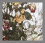 цветочный рисунок Melody