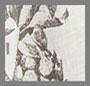 принт с изображением ананаса