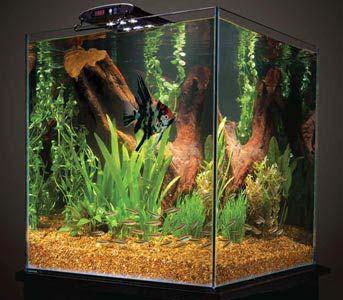 Amazon.com & Amazon.com : Marineland Aquatic Plant LED Light with Timer 18- to ... azcodes.com