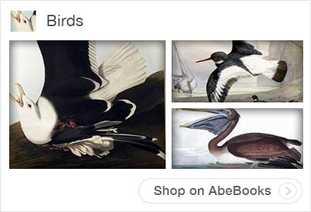 Bird Art Collections on AbeBooks.com