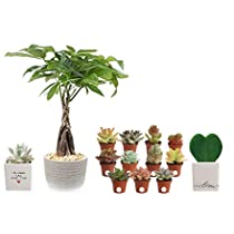 Save 20% on House Plants and Succulents for Valentine's Day