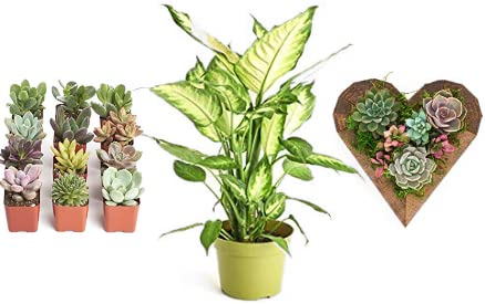 Save 20% on Live Plants and Succulents