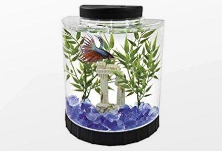 plantas peces y acuáticos
