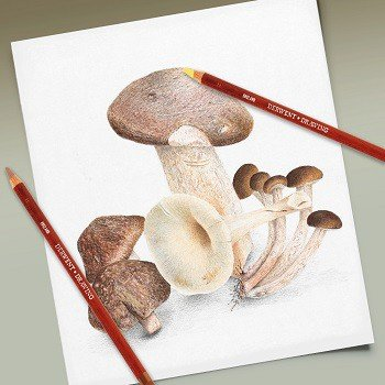 Pencil sketch of mushrooms