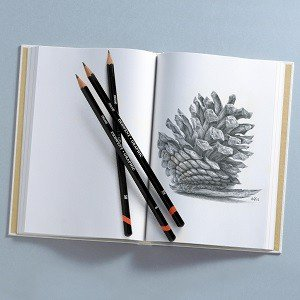 Pinecone sketched with graphic pencils