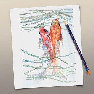 Amazon Derwent Colored Pencils Inktense Ink Drawing