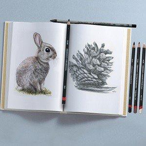 Rabbit sketch