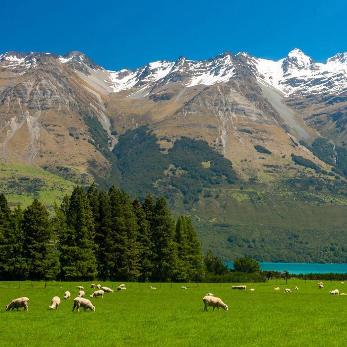 Amazon Com New Zealand Lambskin For Baby 100 Natural